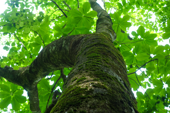 菰釣山 日帰り登山 丹沢のブナ林を歩く