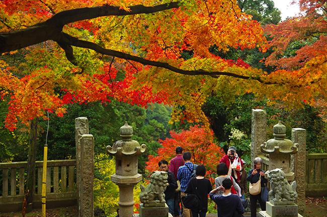 鎌倉獅子舞の紅葉 天園ハイキングコース