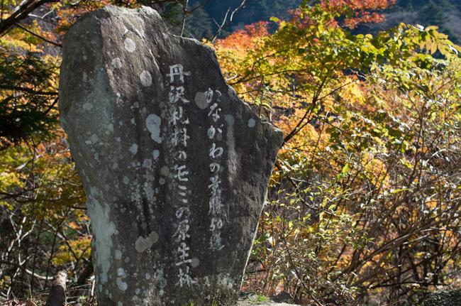 丹沢長尾尾根-10