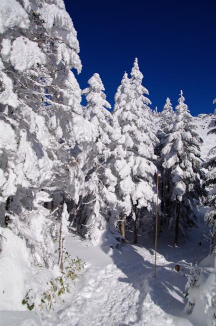 八ヶ岳北横岳冬-2