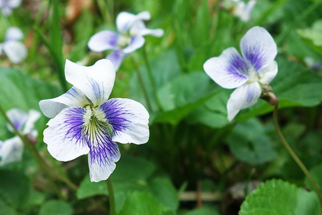 150429海沢探勝路の花