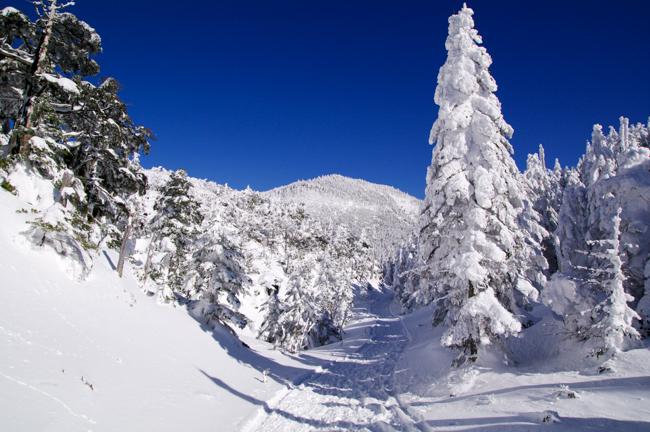 八ヶ岳北横岳冬-24