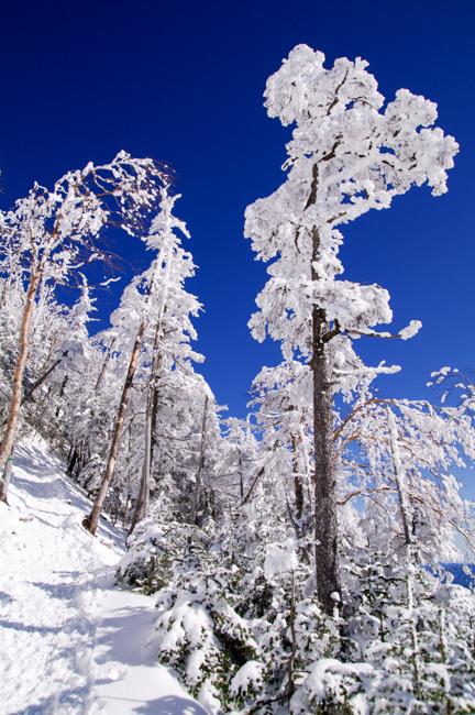 八ヶ岳北横岳冬-9