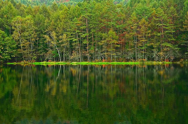 御射鹿池 静寂の森 ~緑響く~