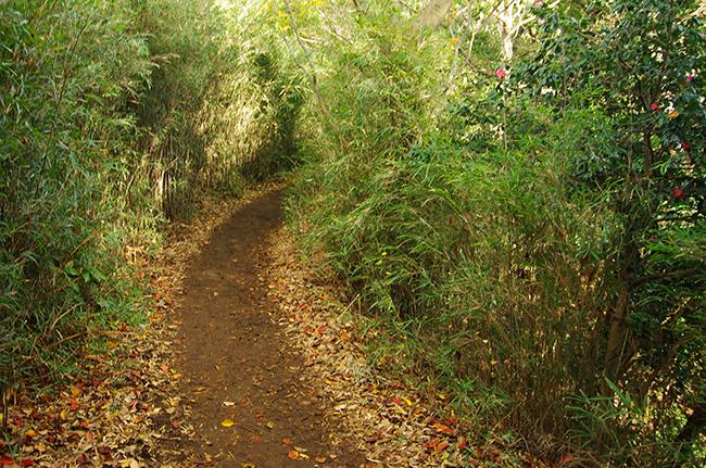 天園ハイキングコース14-6
