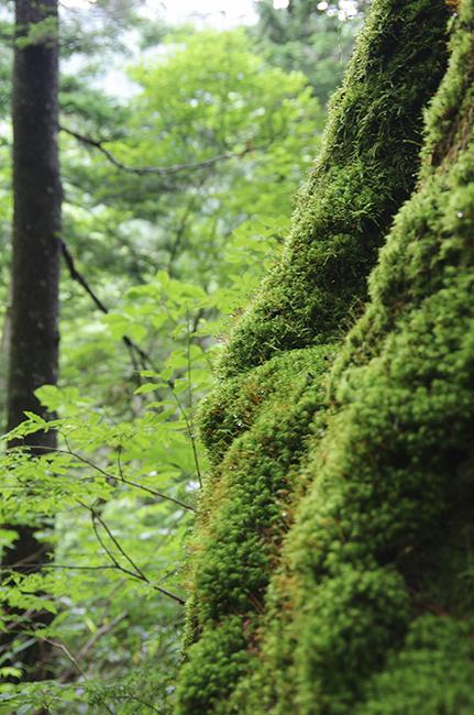 上高地の森1507-5