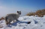 1502塔ノ岳の猫