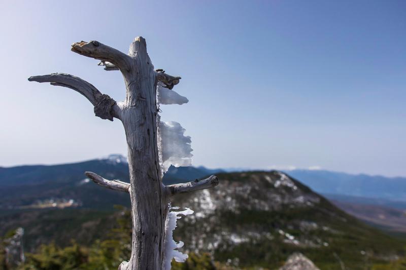 縞枯山〜北横岳-22
