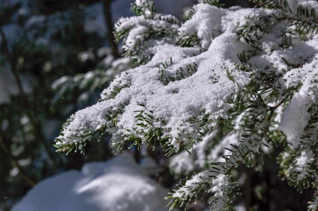 蓼科山12月冬-11