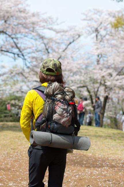 秦野弘法山の桜2017-3