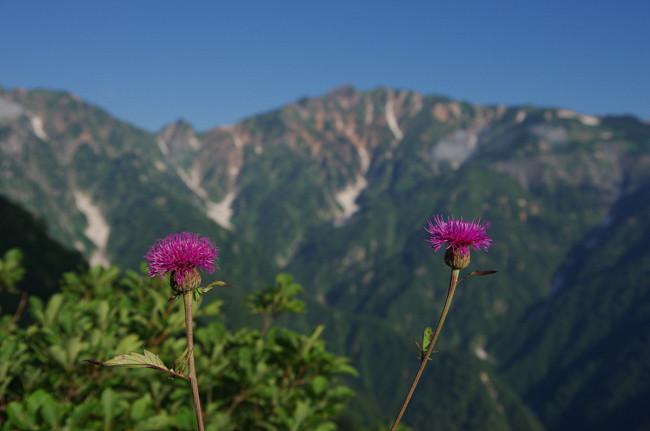 1508五竜岳 遠見尾根-26