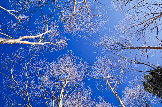 蓼科山12月冬-8