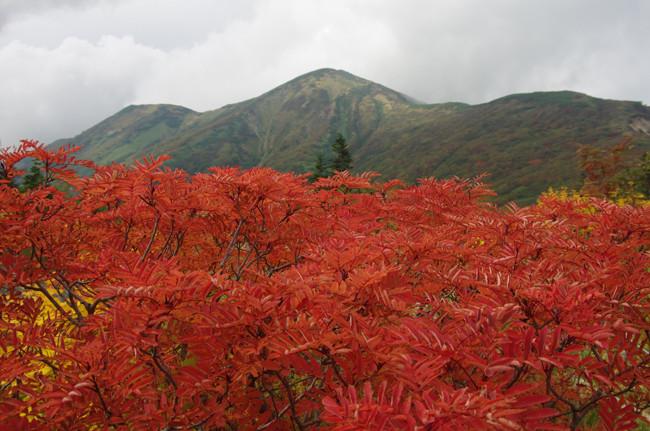 火打山&妙高山 紅葉の高谷池ヒュッテでテント泊  DAY1