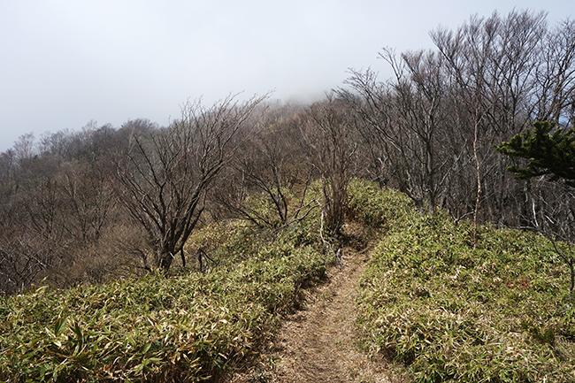 雨ヶ岳へ04185
