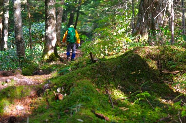 1210乗鞍岳登山道の苔