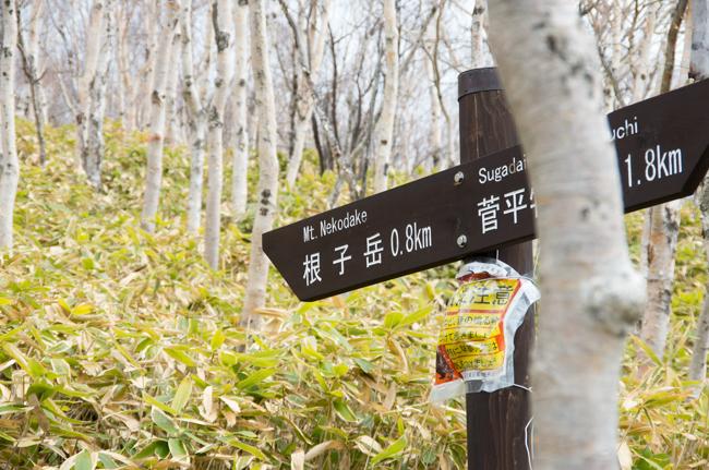 四阿山と根子岳GW縦走-7