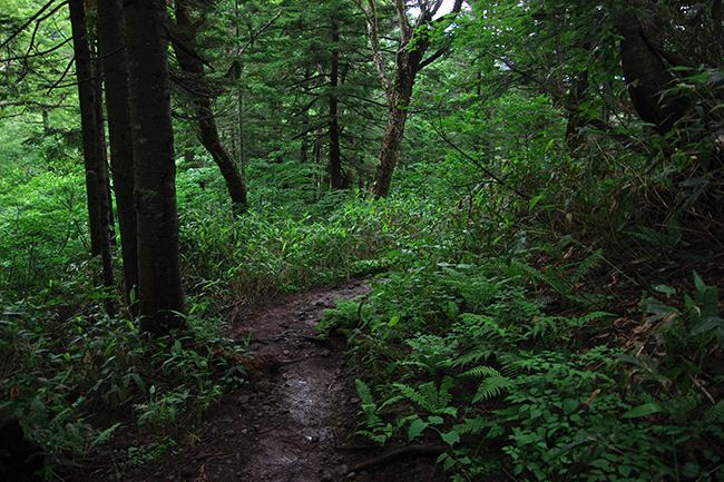 上高地の森1507-6