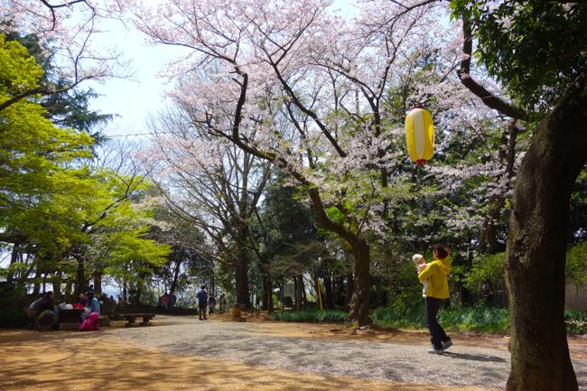秦野弘法山の桜2017-21