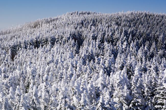 八ヶ岳北横岳冬-29