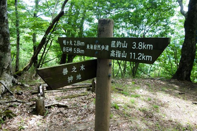 菰釣山のブナ2016-25
