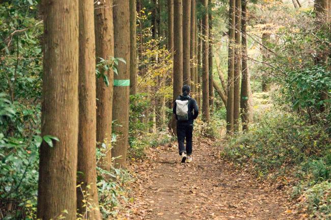 高尾山〜陣馬山縦走2015紅葉-14