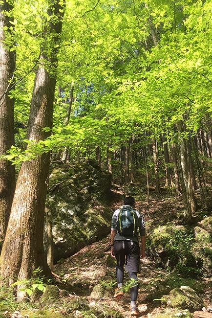 1504海沢探勝路の登り