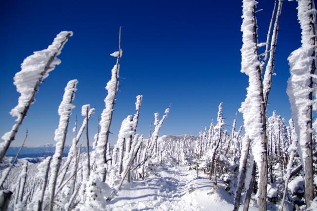 八ヶ岳北横岳冬-30