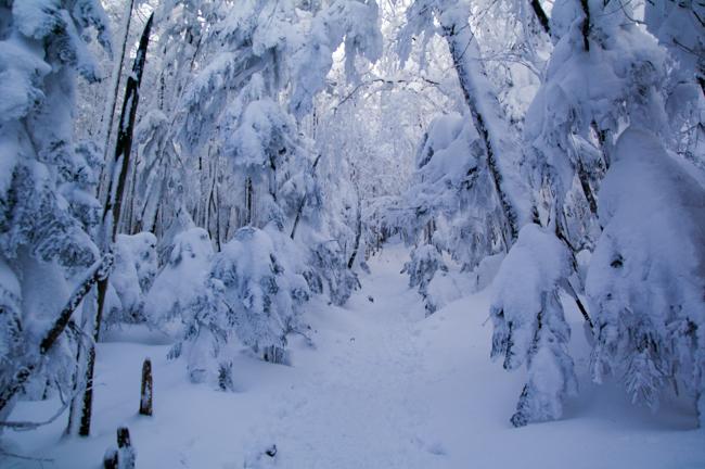 八ヶ岳北横岳冬-26