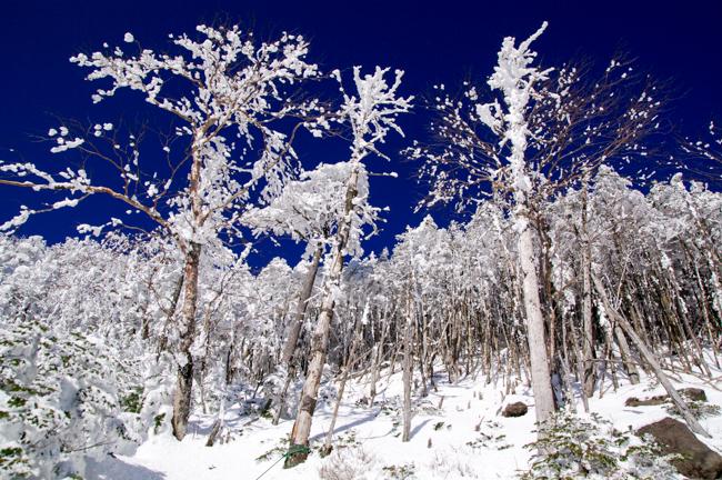 八ヶ岳北横岳冬-10