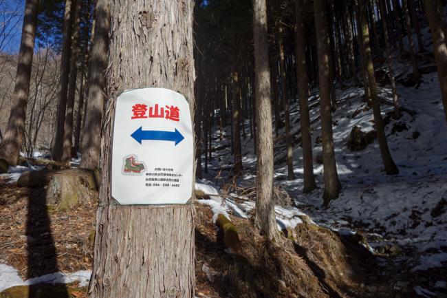 西丹沢大室山の冬-4