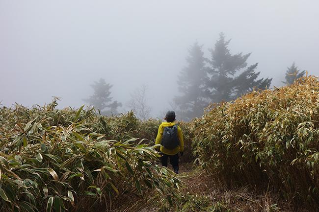 天子山地 雨ヶ岳~毛無山 縦走登山(+RUN)