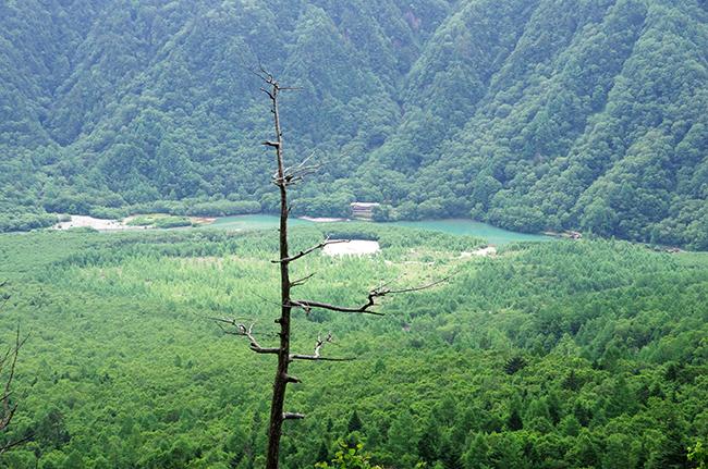 焼岳から大正池1507