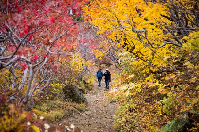 紅葉の安達太良山 奥岳温泉〜くろがね小屋周回コース